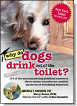 Why Do Dogs Drink Out of the Toilet?